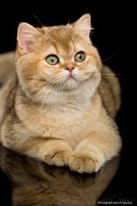World Cat Show Pruszków 22-23.10.2016